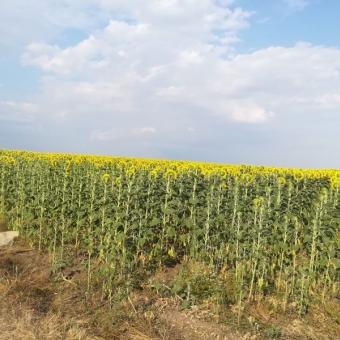 Lüleburgaz Karağaç köyünde Satılık Tarla