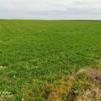Lüleburgaz Evrensekizde Satılık Tarım Arazisi