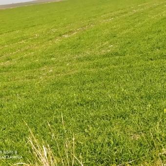 Lüleburgaz Evresekiz OSB ye Yakın Satılık Tarım Arazisi